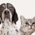 Amazonから動物保護施設の犬や猫を支援できるプログラム開始