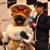 あの金獅子ラージャンが来る!『「MHW:アイスボーン」狩猟解禁直前!プレミアム生放送』で明かされた新情報!