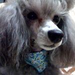 犬がしゃべる料理動画「COOKING with DOG」大人気の秘密