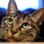 スマホを卒業して本格的に撮りたい人向けの富士フイルム「X-A7」で猫を撮る
