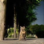 iPhone 11 Proは最強の猫撮りスマホかもしれない