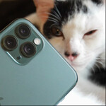 ついにiPhoneにも猫認識!? iPhone 11 Proで猫を撮る!