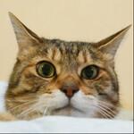 ソニーの「RX100M7」は最強の猫撮りコンデジだ!