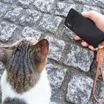 iPhone XSは鞆の浦、坂の上のお寺の夏猫たちを撮るのに最適