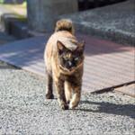オリンパス「OM-D E-M1 Mark II」を持って早朝の鞆の浦で猫に出会う