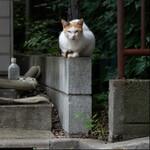 都会の猫たちをオリンパス「OM-D E-M1 MarkII」で静かに撮る
