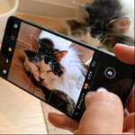 ファーウェイ「HUAWEI P30」は猫を撮るのに最適か!?