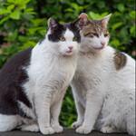 猫がいっぱいいた、とある公園の15年間を写真で振り返る