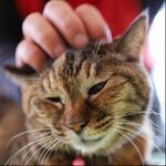 キヤノン「EOS RP」は猫を撮るのに最適のカメラか!?