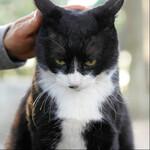 ソニー「α7 III」の猫瞳AFを外猫で試した結果!