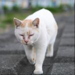 富士フィルムのミラーレス一眼「X-T30」を持って外猫を撮りに行く!