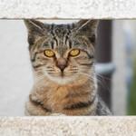 ソニー「α6400」は猫撮りの楽しさをハイテクでサポートしてくれるカメラ