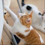 「はじめてのネコ撮影」講座とやらをやってみた話