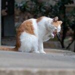 猫を遠くからこっそり撮影できるオリンパスの12-200mmレンズ