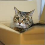CP+を前に35mmフルサイズミラーレス一眼を猫と一緒におさらい