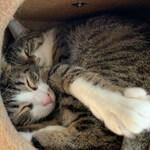 保護猫シェルターQUEUEでiPhone XSが大活躍!
