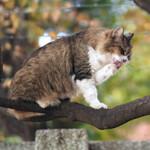曲がりくねった枝は猫用のとまり木である!