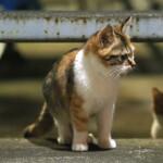 シグマの新型レンズ「56mm F1.4 DC DN」で夜の猫も室内猫もOK!