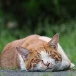 ニコン・COOLPIX P1000の超望遠で秋の猫を狙う