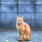 シグマの「ボケマスター」はボケを極めた写真を撮るのに最適なレンズ!