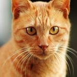 シグマのハイエンドレンズ「ボケマスター」でボケ猫を撮る