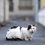 視点を猫と同じに! 這いつくばって街の猫を撮る方法