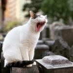 アップルにiPhone XSで撮った猫写真がピックアップされた話