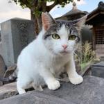 秋の新製品・富士フイルム「X-T3」で寺猫を激写!