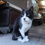散歩猫を富士フイルムの新型ミラーレス「X-T3」で撮影