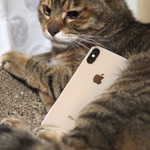 iPhone XSのポートレートモードは猫だってキレイに!