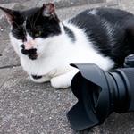 ニコンの新型ミラーレス「Z 7」で夜の猫たちを激写!