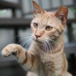 人間も猫も過酷だった夏を猫たちともに振り返る