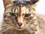 勢いで買ったシグマのレンズ「30mm F1.4 DC DN」で猫を撮る