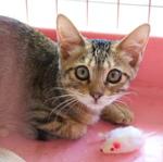子猫が里親に引き取られていく季節なので子猫写真特集