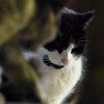 最近のデジカメは夜の猫もきれいに撮れる