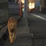 幻想的な雰囲気がいい 逢魔が時に撮る夏の猫