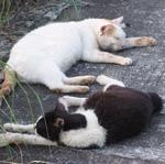 """猛暑でよく見る 夏バテ……ならぬ""""にゃつバテ""""猫"""