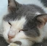パナソニックの光学10倍高級コンデジ「DC-TX2」で猫を撮る
