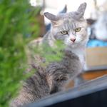 怪談猫……ならぬ、階段が似合う猫たち