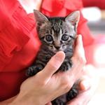 久しぶりに猫宅訪問 友人宅の元気な子猫を撮る