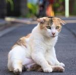 何気ない雰囲気でもかわいい住宅街の路上猫