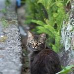 坂の町長崎で出会った、坂道の猫たち