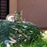 苔むした岩の上で瞑想!? 長崎のお寺猫たちを撮る