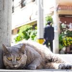 尾曲がり猫との出会い……猫の街、長崎で猫撮影