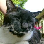 撤退が決まったカシオのデジカメを猫写真で振り返る