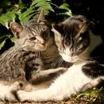 ミラーレス一眼に合うオールドレンズ3本で猫を撮る
