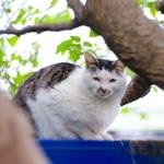 江戸時代! 1840年設計のロシア製オールドレンズ「Petzval」で猫を撮る