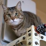 超広角レンズで我が家の棚の上の猫を撮る