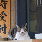 状況に合わせてレンズを変えて……お寺の猫たちを撮る