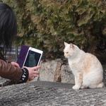 同じ感じでつい……猫を撮っている人を撮る
